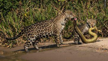 best of wildlife photography 2020