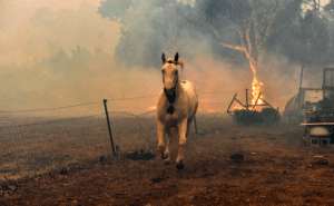 australian bushfire 2020 humanity best touching images animals
