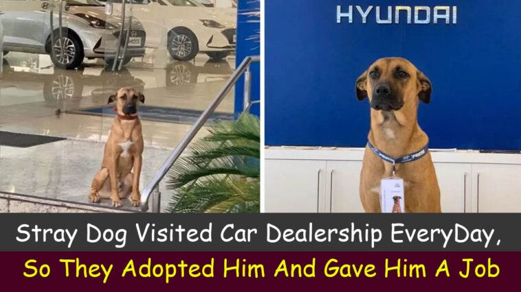 Stray Dog Visited Car Dealership Every Day, So They Adopted Him And Gave Him A Job