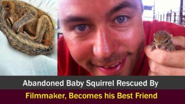 story of Rob the Sri Lankan palm squirrel