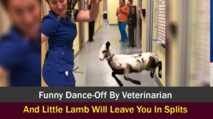 Funny Dance-Off By Veterinarian And Little Lamb Will Leave You In Splits