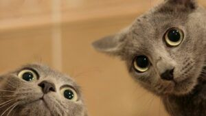 best cat gifs of all time